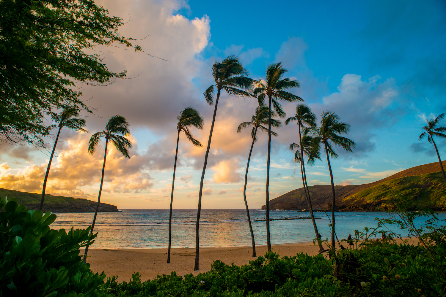 Wide angle image of palm trees at Hanauma Bay, Oahu Hawaii. Taken at sunrise on a beautiful Spring morning.