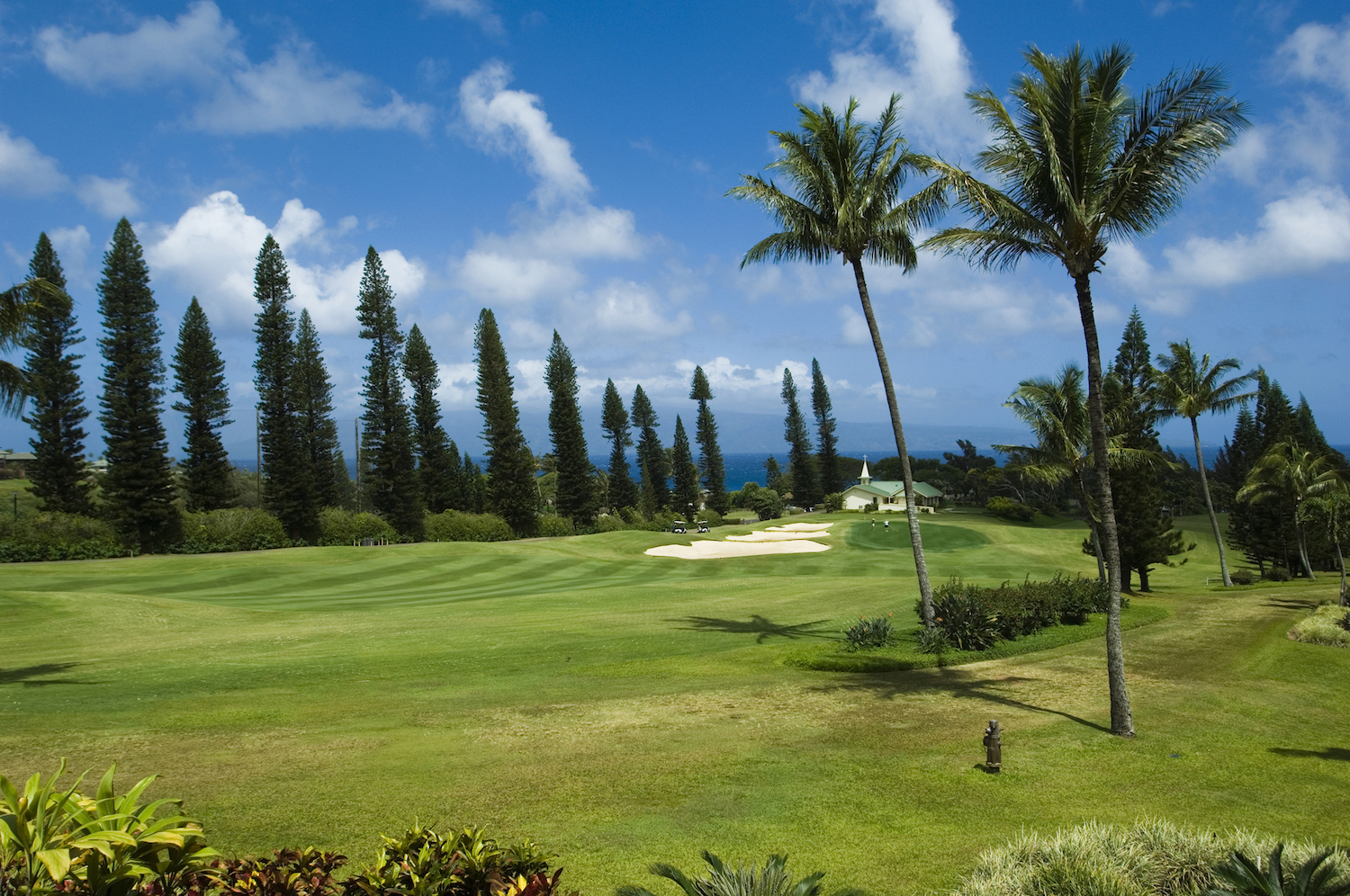 Broder palm trees on the golf course in Hawaii